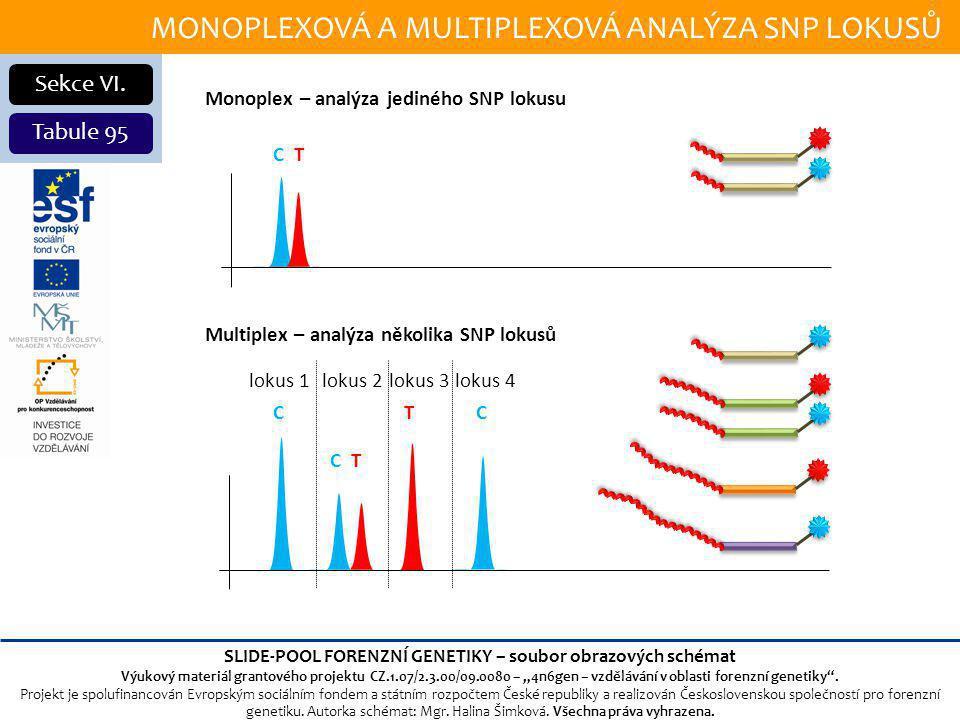 MONOPLEXOVÁ A MULTIPLEXOVÁ ANALÝZA SNP LOKUSŮ Sekce VI.