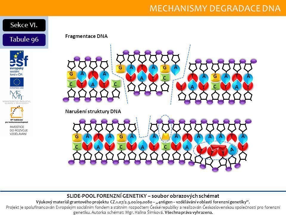 MECHANISMY DEGRADACE DNA Sekce VI.