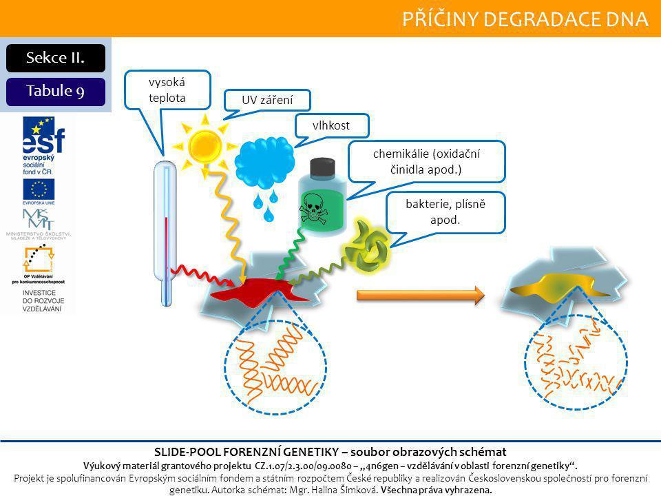PŘÍČINY DEGRADACE DNA Sekce II.