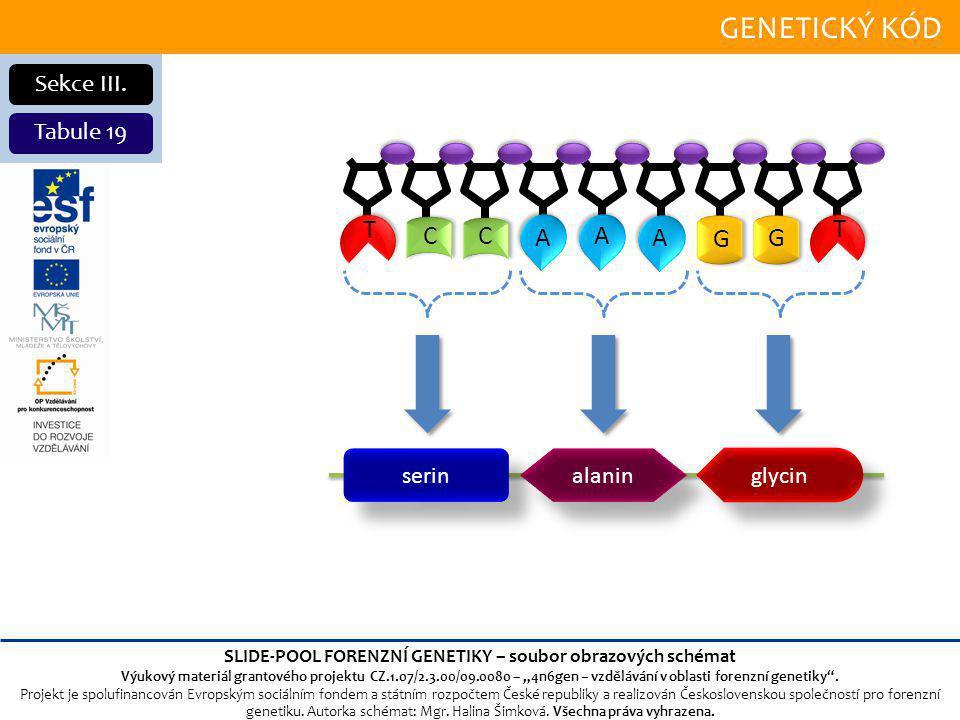 GENETICKÝ KÓD Sekce III.