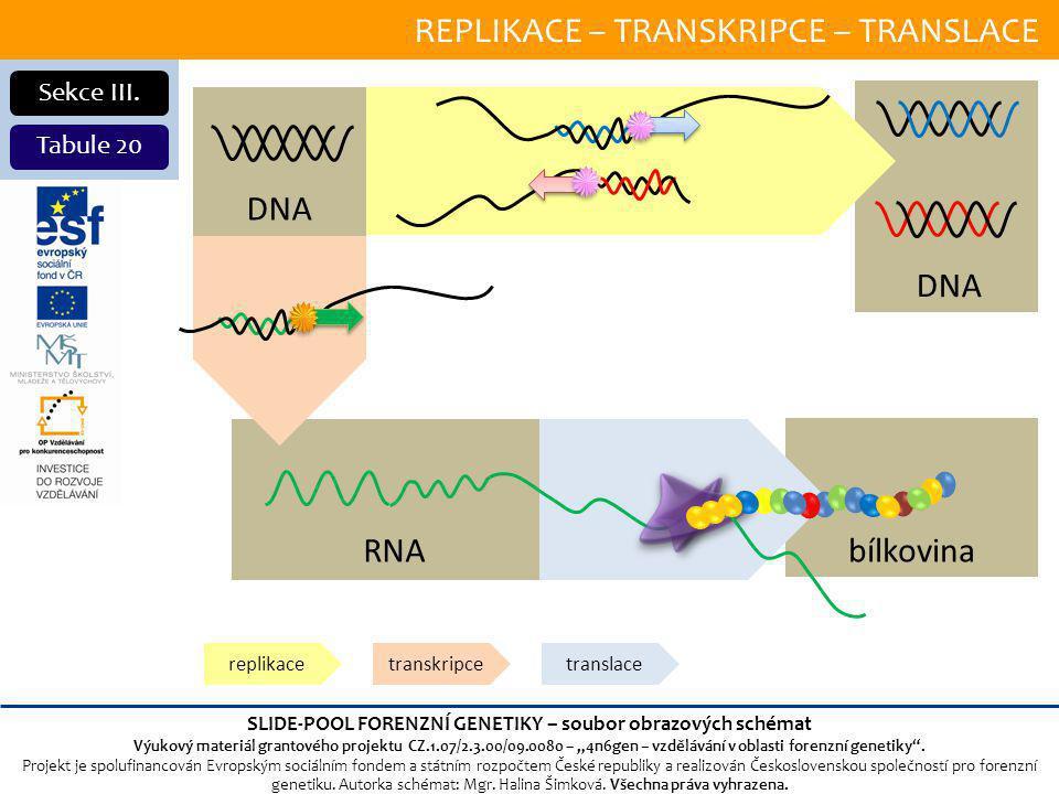 REPLIKACE – TRANSKRIPCE – TRANSLACE Sekce III.