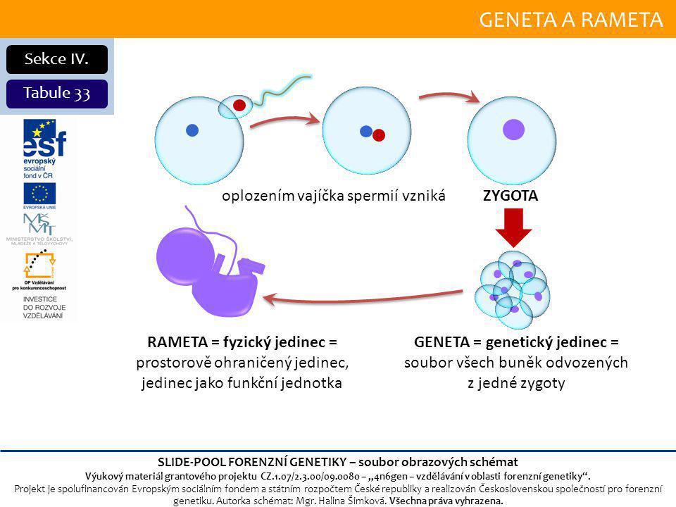GENETA A RAMETA Sekce IV.