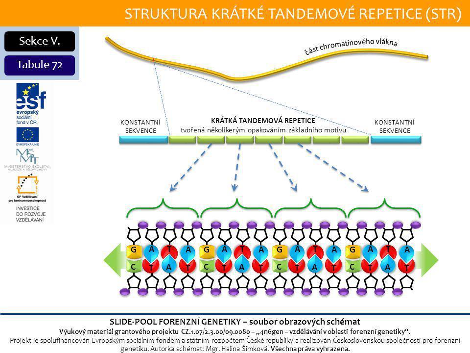 STRUKTURA KRÁTKÉ TANDEMOVÉ REPETICE (STR) Sekce V.