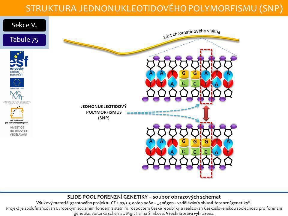 STRUKTURA JEDNONUKLEOTIDOVÉHO POLYMORFISMU (SNP) Sekce V.
