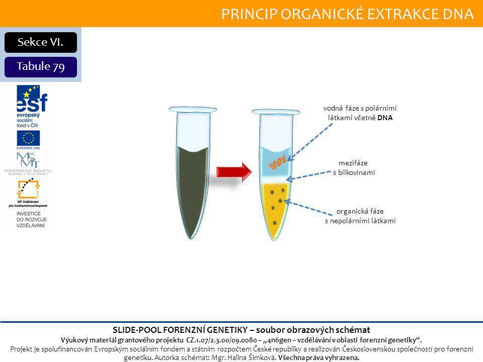 PRINCIP ORGANICKÉ EXTRAKCE DNA Sekce VI.