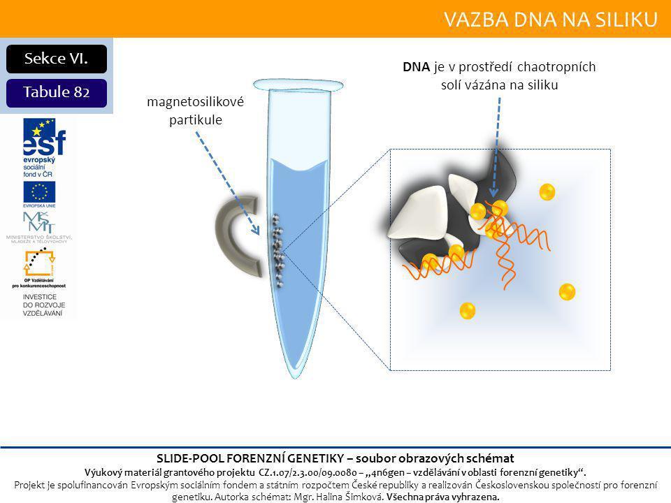 VAZBA DNA NA SILIKU Sekce VI.
