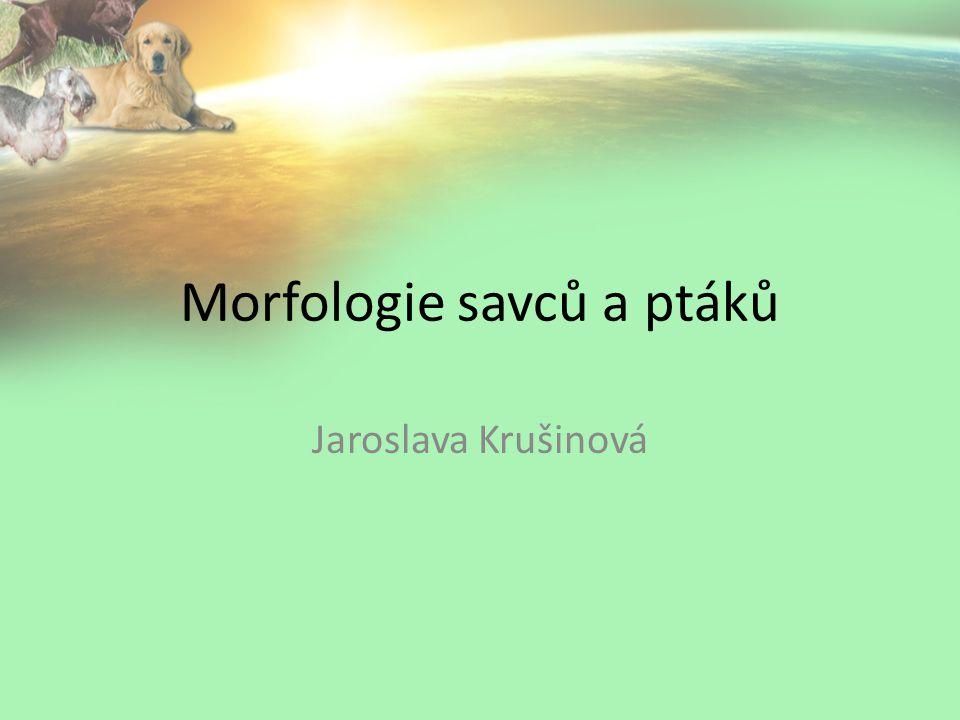 Morfologie savců a ptáků Jaroslava Krušinová
