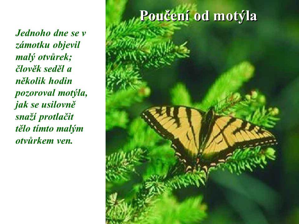 Poučení od motýla Jednoho dne se v zámotku objevil malý otvůrek; člověk seděl a několik hodin pozoroval motýla, jak se usilovně snaží protlačit tělo t