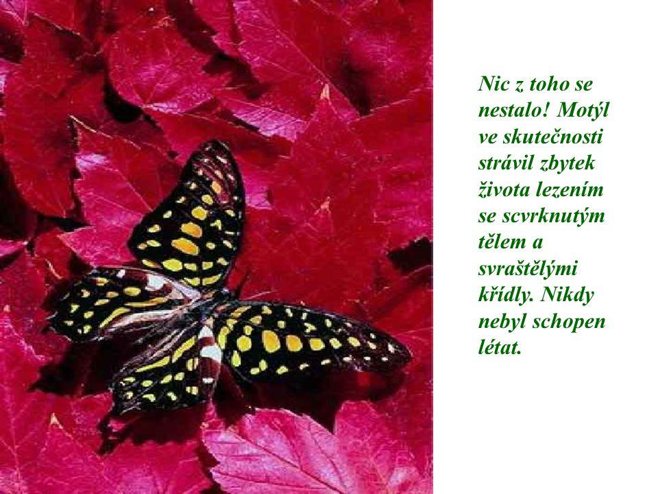 Nic z toho se nestalo! Motýl ve skutečnosti strávil zbytek života lezením se scvrknutým tělem a svraštělými křídly. Nikdy nebyl schopen létat.