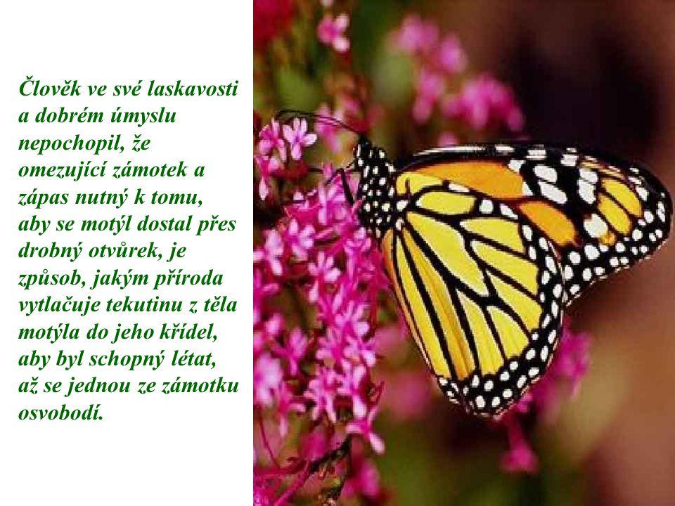 Člověk ve své laskavosti a dobrém úmyslu nepochopil, že omezující zámotek a zápas nutný k tomu, aby se motýl dostal přes drobný otvůrek, je způsob, ja
