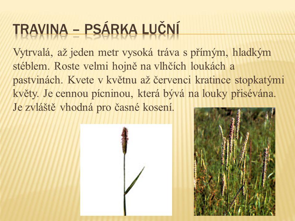 Vytrvalá, až jeden metr vysoká tráva s přímým, hladkým stéblem. Roste velmi hojně na vlhčích loukách a pastvinách. Kvete v květnu až červenci kratince