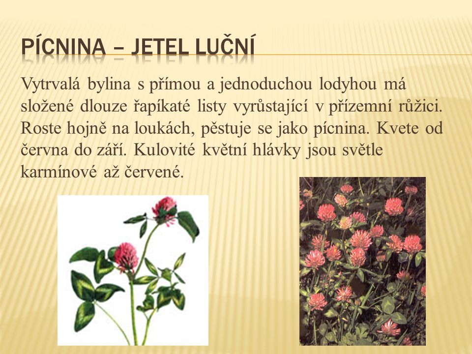 Vytrvalá bylina s přímou a jednoduchou lodyhou má složené dlouze řapíkaté listy vyrůstající v přízemní růžici. Roste hojně na loukách, pěstuje se jako