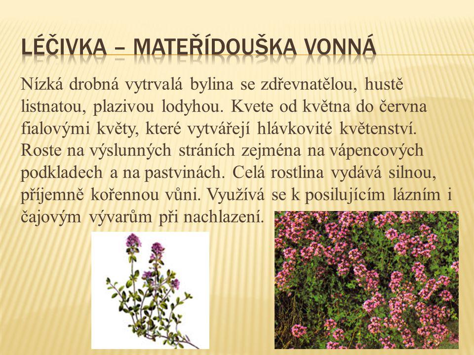 Nízká drobná vytrvalá bylina se zdřevnatělou, hustě listnatou, plazivou lodyhou. Kvete od května do června fialovými květy, které vytvářejí hlávkovité