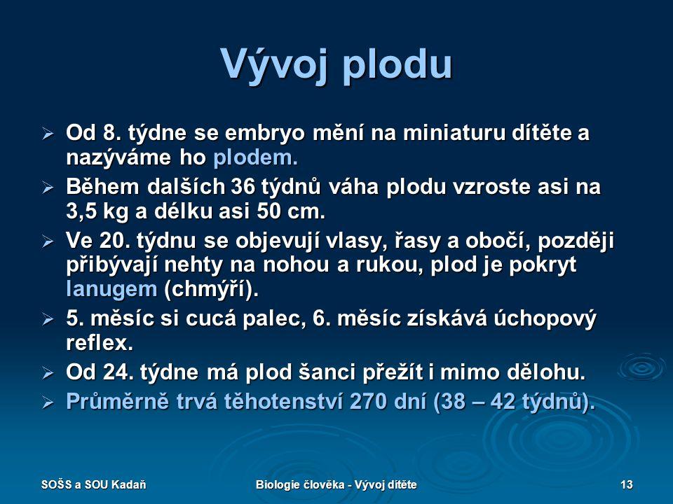 SOŠS a SOU KadaňBiologie člověka - Vývoj dítěte13 Vývoj plodu  Od 8.