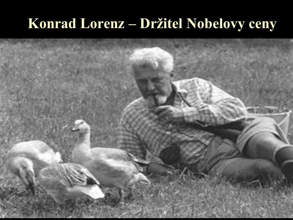 """Synovské vštípení Lorenz demonstroval, jak se husy z umělé líhně vtisknou na první vhodný pohybující se stimul, který uvidí v tom, čemu on říká """"kritické období cca 36-ti hodin po vylíhnutí"""