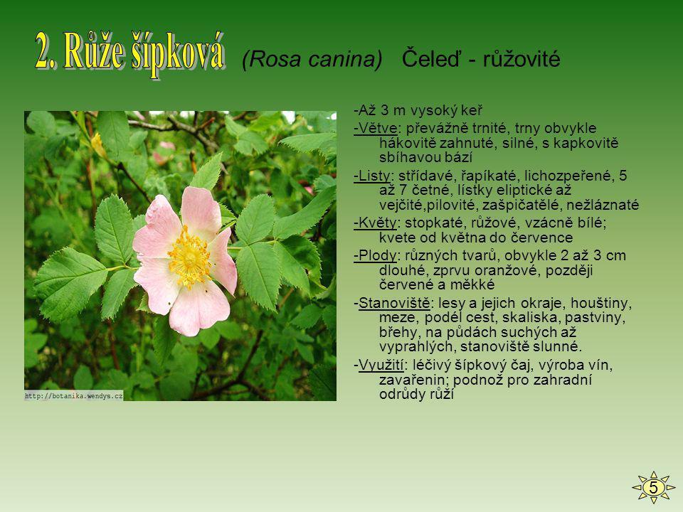 -Jednoletá, 20 až 90 cm vysoká bylina, která roní mléko -Stonek: málo větvený, odstále chlupatý -Listy: spodní řapíkaté, horní přisedlé, peřenodílné až peřenosečné, úkrojky ostře zubaté, všechny střídavé -Květy: květy na dlouhých, štětinatých stopkách, korunní lístky vzájemně překrývající se, červené, vzácně bílé, na bázi často s fialovou až černou skvrnou; kvete od května do září -Stanoviště: rumiště, okraje komunikací, pole, štěrkoviště, preferuje půdy výživné, hlinité, zásadité až mírně kyselé -Zajímavost: mák vlčí byl v minulosti užíván jako náhražka opia.