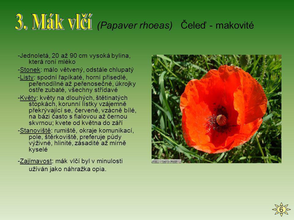 -Opadavý strom s široce převislými větvemi; výška až 10 m -Listy: vejčité, krátce zašpičatělé, vroubkovaně pilovité, svrchu olysalé, vespod na žilkách chlupaté -Květy: oboupohlavné, zvenku narůžovělé, na vnitřní straně zářivě bílé -Plody: malvice; žlutozelené, za zralosti na podzim na osluněné straně slabě červené; chutnají kysele, aromaticky voní -Stanoviště: světlé, případně polostinné porosty v klimatických polohách s vlhkým vzduchem -Zajímavost: jablka zvyšují odolnost organismu proti různým chorobám (Malus sylvestris) Čeleď - růžovité 7