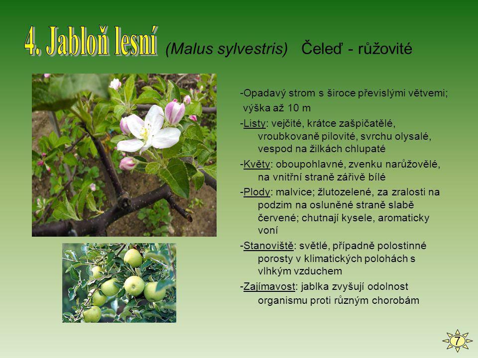 -Vytrvalá léčivá bylina; 5-30 cm vysoká -dlouhé kořenové výběžky; stonkové šlahouny -Listy: dlouhé, řapíkaté, v přízemní růžici -Květy: bílé, většinou s pěti korunními a pěti kališními lístky; kvete od května do června Plody: drobné žlutohnědé nažky sedící na zdužnatělém květním lůžku, zralé jsou výrazně červené -Stanoviště: často ve světlých lesích, u lesních cest a na pasekách -Využití: sbírá se pro léčivé účinky: slabě močopudný prostředek, v čerstvém stavu ke skleróze, vysokém krevním tlaku atd.