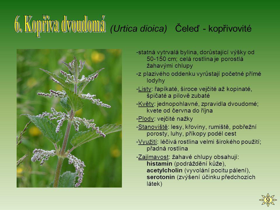 -jednoletá bylina; kolem 1m vysoká -Stonek: lodyha je buď přímá, nebo se otáčivě ovíjí kolem opory (až 4m) -Listy: střídavě postavené, složené-tři vejčitě zašpičatělé lístky -Květy: dlouhé stopky, široký zelený kalich a bělavá, narůžovělá až fialková koruna; květenství- hroznové -Plody: dlouhý lusk, semena mají ledvinovitý tvar -Stanoviště: pěstuje se na mnoha zahradách a polích; teplejší oblasti -Zajímavost: je to stará kulturní rostlina, kterou pěstovali Indiáni dávno před objevením Ameriky (Phaseolus vulgaris) Čeleď - bobovité 10