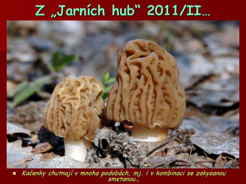 """Z """"Jarních hub"""" 2011/II…  Kačenky chutnají v mnoha podobách, mj. i v kombinaci se zakysanou smetanou…"""