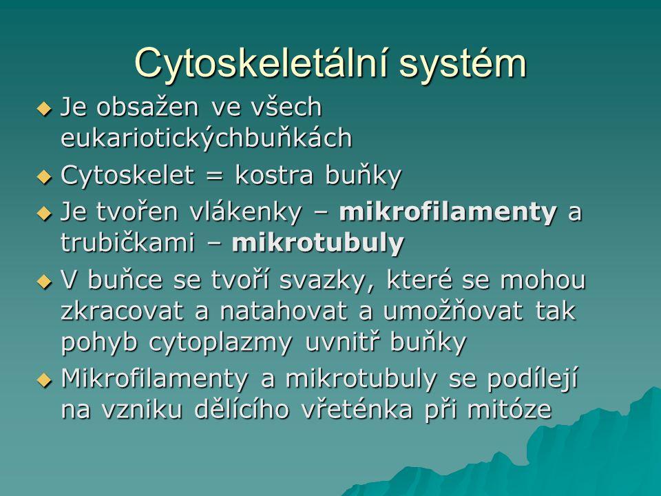 Cytoskeletální systém  Je obsažen ve všech eukariotickýchbuňkách  Cytoskelet = kostra buňky  Je tvořen vlákenky – mikrofilamenty a trubičkami – mik