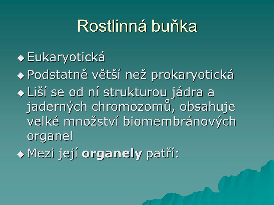 Rostlinná buňka  Eukaryotická  Podstatně větší než prokaryotická  Liší se od ní strukturou jádra a jaderných chromozomů, obsahuje velké množství biomembránových organel  Mezi její organely patří: