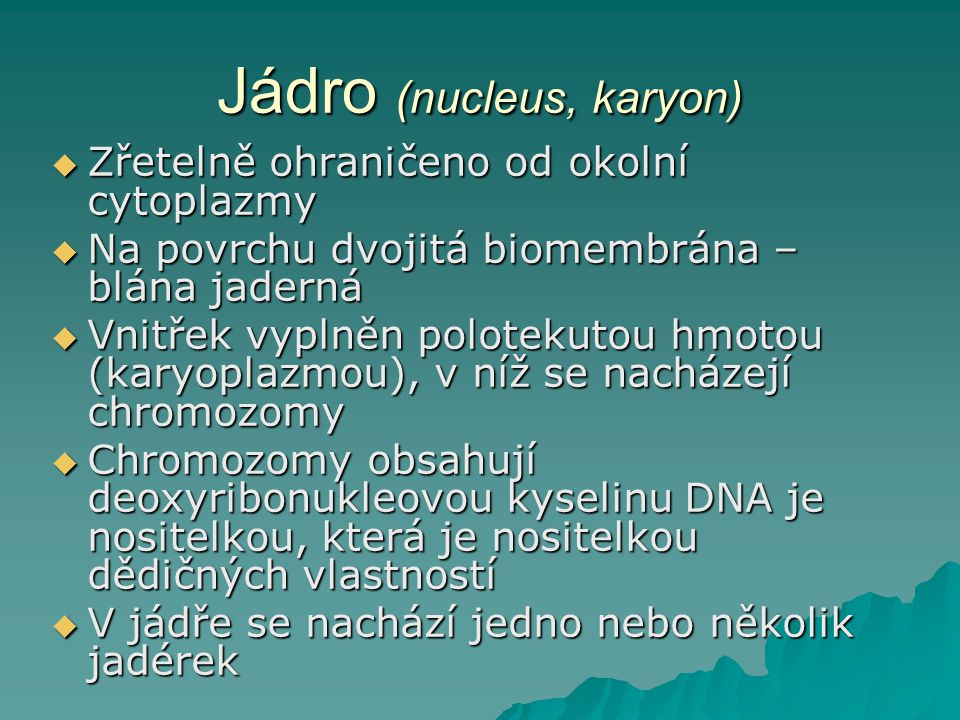 Jádro (nucleus, karyon)  Zřetelně ohraničeno od okolní cytoplazmy  Na povrchu dvojitá biomembrána – blána jaderná  Vnitřek vyplněn polotekutou hmotou (karyoplazmou), v níž se nacházejí chromozomy  Chromozomy obsahují deoxyribonukleovou kyselinu DNA je nositelkou, která je nositelkou dědičných vlastností  V jádře se nachází jedno nebo několik jadérek