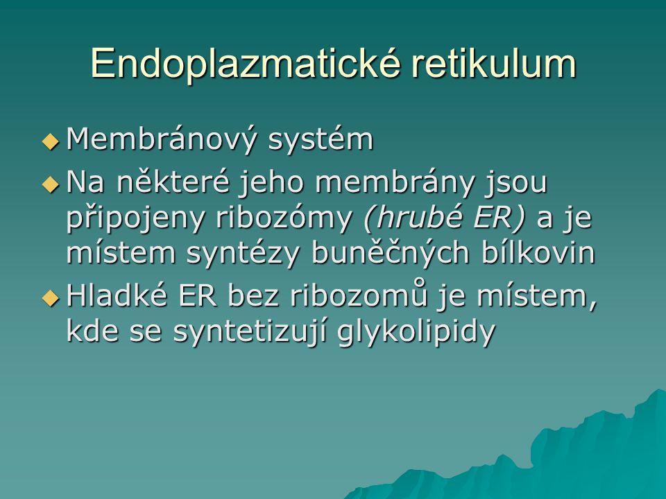 Endoplazmatické retikulum  Membránový systém  Na některé jeho membrány jsou připojeny ribozómy (hrubé ER) a je místem syntézy buněčných bílkovin  Hladké ER bez ribozomů je místem, kde se syntetizují glykolipidy