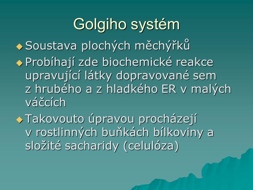 Golgiho systém  Soustava plochých měchýřků  Probíhají zde biochemické reakce upravující látky dopravované sem z hrubého a z hladkého ER v malých váčcích  Takovouto úpravou procházejí v rostlinných buňkách bílkoviny a složité sacharidy (celulóza)
