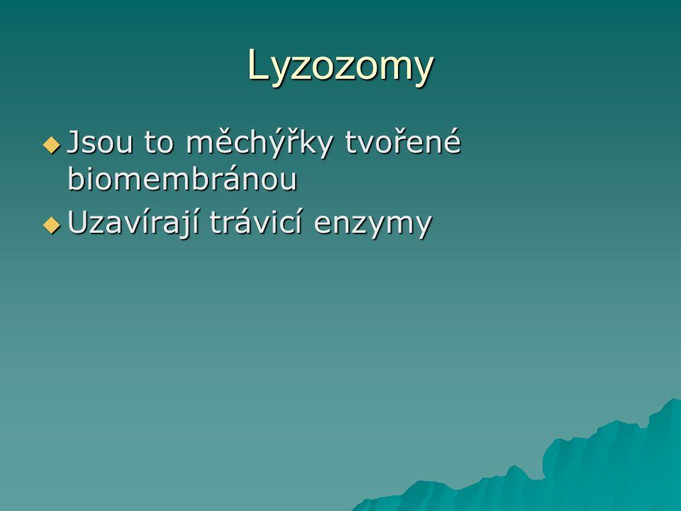 Lyzozomy  Jsou to měchýřky tvořené biomembránou  Uzavírají trávicí enzymy