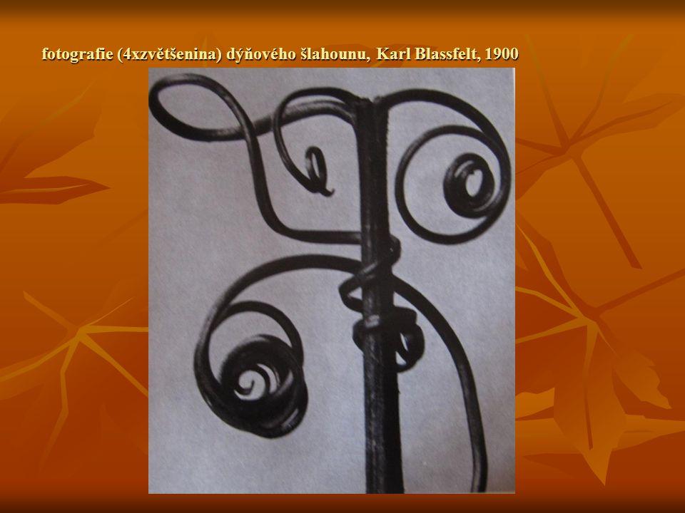 fotografie (4xzvětšenina) dýňového šlahounu, Karl Blassfelt, 1900