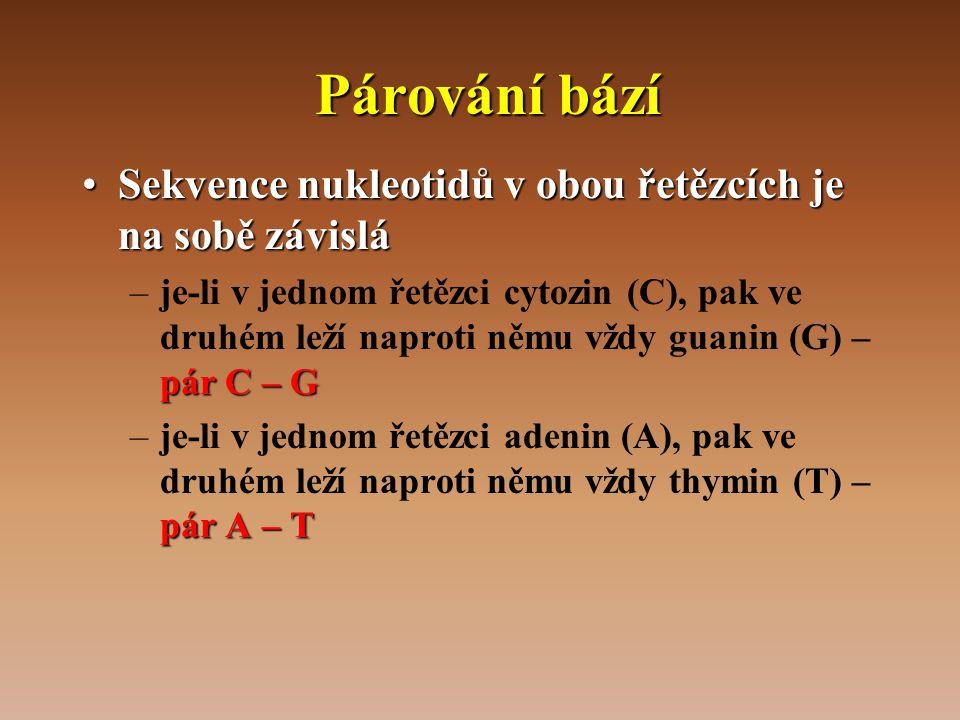 Párování bází •Sekvence nukleotidů v obou řetězcích je na sobě závislá pár C – G –je-li v jednom řetězci cytozin (C), pak ve druhém leží naproti němu vždy guanin (G) – pár C – G pár A – T –je-li v jednom řetězci adenin (A), pak ve druhém leží naproti němu vždy thymin (T) – pár A – T