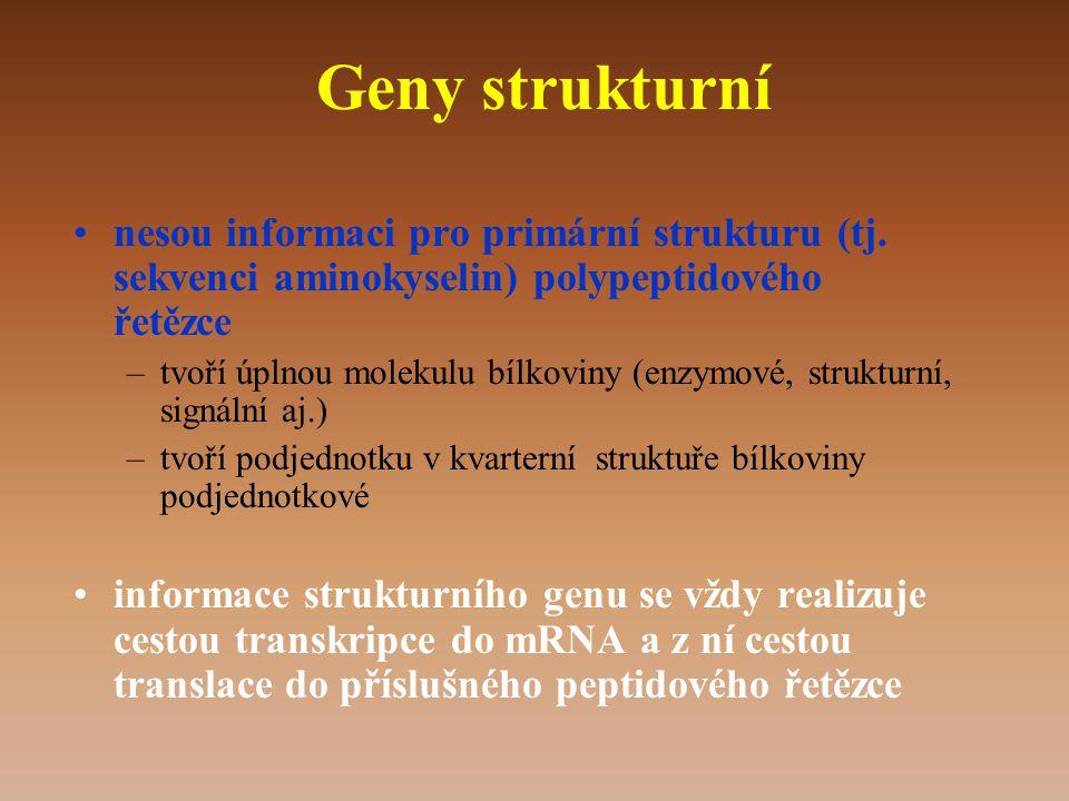 Geny strukturní •nesou informaci pro primární strukturu (tj.
