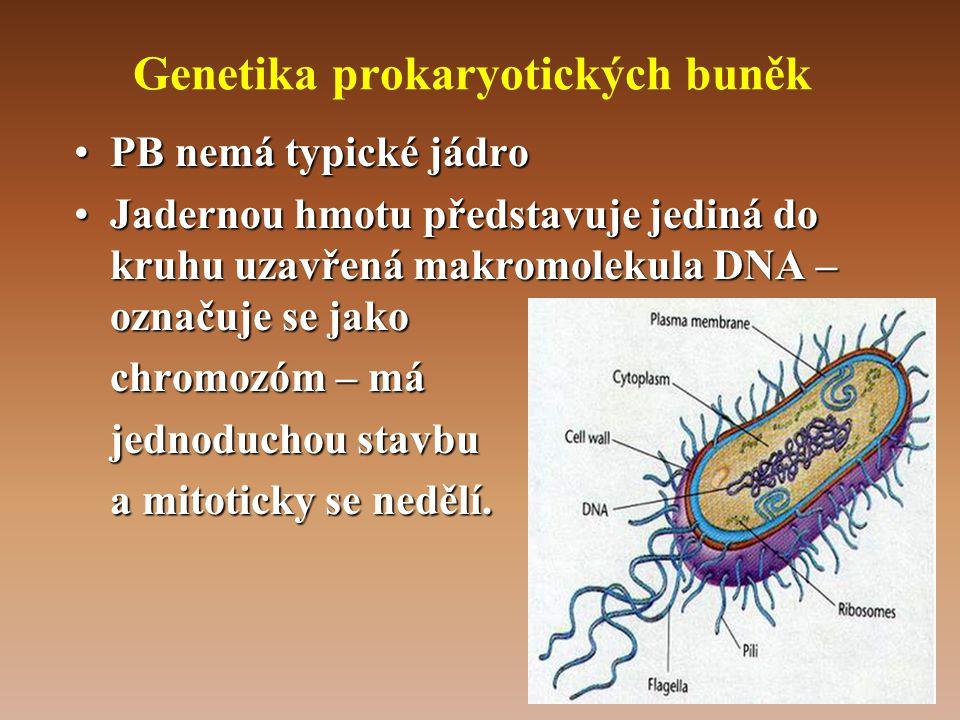 Genetika prokaryotických buněk •PB nemá typické jádro •Jadernou hmotu představuje jediná do kruhu uzavřená makromolekula DNA – označuje se jako chromozóm – má jednoduchou stavbu a mitoticky se nedělí.