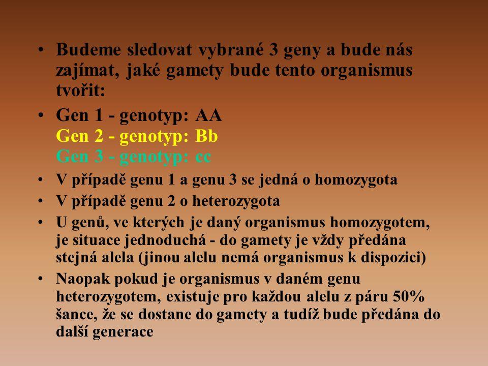 •Budeme sledovat vybrané 3 geny a bude nás zajímat, jaké gamety bude tento organismus tvořit: •Gen 1 - genotyp: AA Gen 2 - genotyp: Bb Gen 3 - genotyp: cc •V případě genu 1 a genu 3 se jedná o homozygota •V případě genu 2 o heterozygota •U genů, ve kterých je daný organismus homozygotem, je situace jednoduchá - do gamety je vždy předána stejná alela (jinou alelu nemá organismus k dispozici) •Naopak pokud je organismus v daném genu heterozygotem, existuje pro každou alelu z páru 50% šance, že se dostane do gamety a tudíž bude předána do další generace