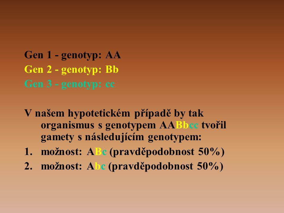 Gen 1 - genotyp: AA Gen 2 - genotyp: Bb Gen 3 - genotyp: cc V našem hypotetickém případě by tak organismus s genotypem AABbcc tvořil gamety s následujícím genotypem: 1.možnost: ABc (pravděpodobnost 50%) 2.možnost: Abc (pravděpodobnost 50%)