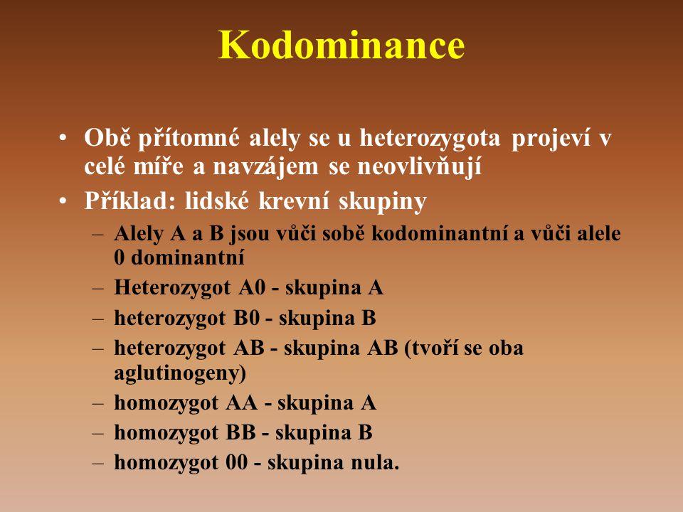 Kodominance •Obě přítomné alely se u heterozygota projeví v celé míře a navzájem se neovlivňují •Příklad: lidské krevní skupiny –Alely A a B jsou vůči sobě kodominantní a vůči alele 0 dominantní –Heterozygot A0 - skupina A –heterozygot B0 - skupina B –heterozygot AB - skupina AB (tvoří se oba aglutinogeny) –homozygot AA - skupina A –homozygot BB - skupina B –homozygot 00 - skupina nula.