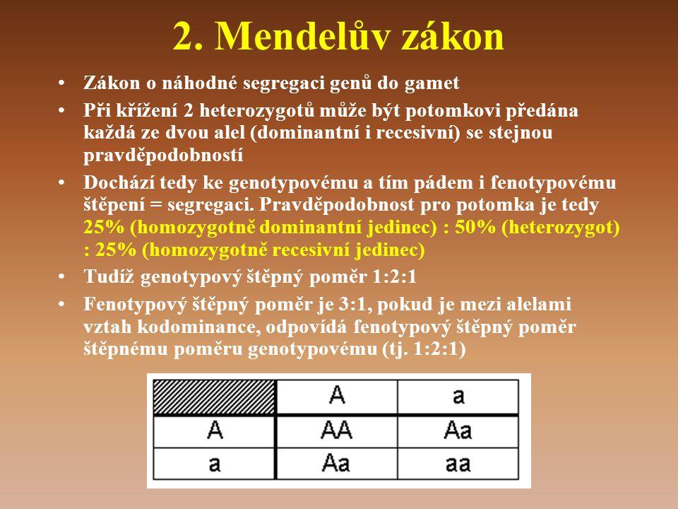 2. Mendelův zákon •Zákon o náhodné segregaci genů do gamet •Při křížení 2 heterozygotů může být potomkovi předána každá ze dvou alel (dominantní i rec