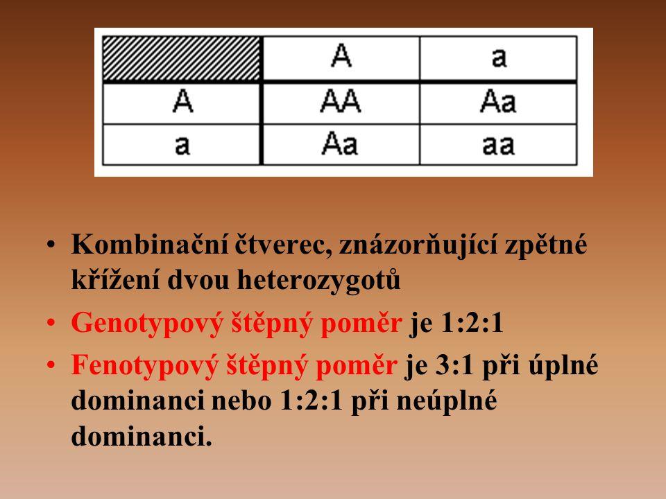 •Kombinační čtverec, znázorňující zpětné křížení dvou heterozygotů •Genotypový štěpný poměr je 1:2:1 •Fenotypový štěpný poměr je 3:1 při úplné dominanci nebo 1:2:1 při neúplné dominanci.