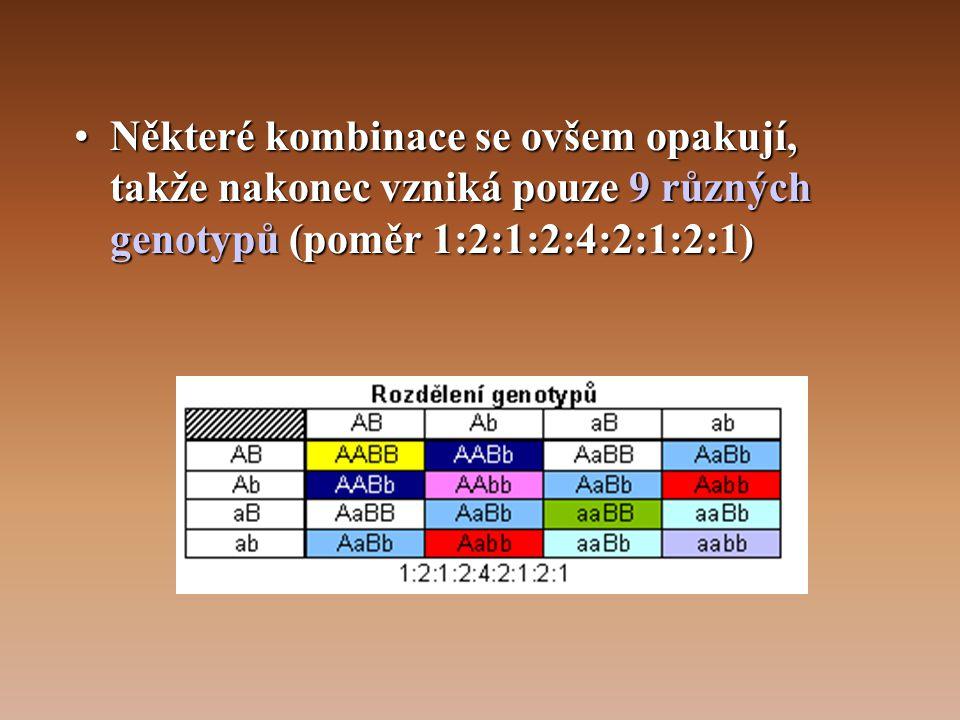 •Některé kombinace se ovšem opakují, takže nakonec vzniká pouze 9 různých genotypů (poměr 1:2:1:2:4:2:1:2:1)