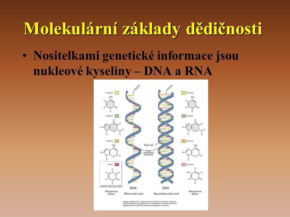 Molekulární základy dědičnosti •Nositelkami genetické informace jsou nukleové kyseliny – DNA a RNA
