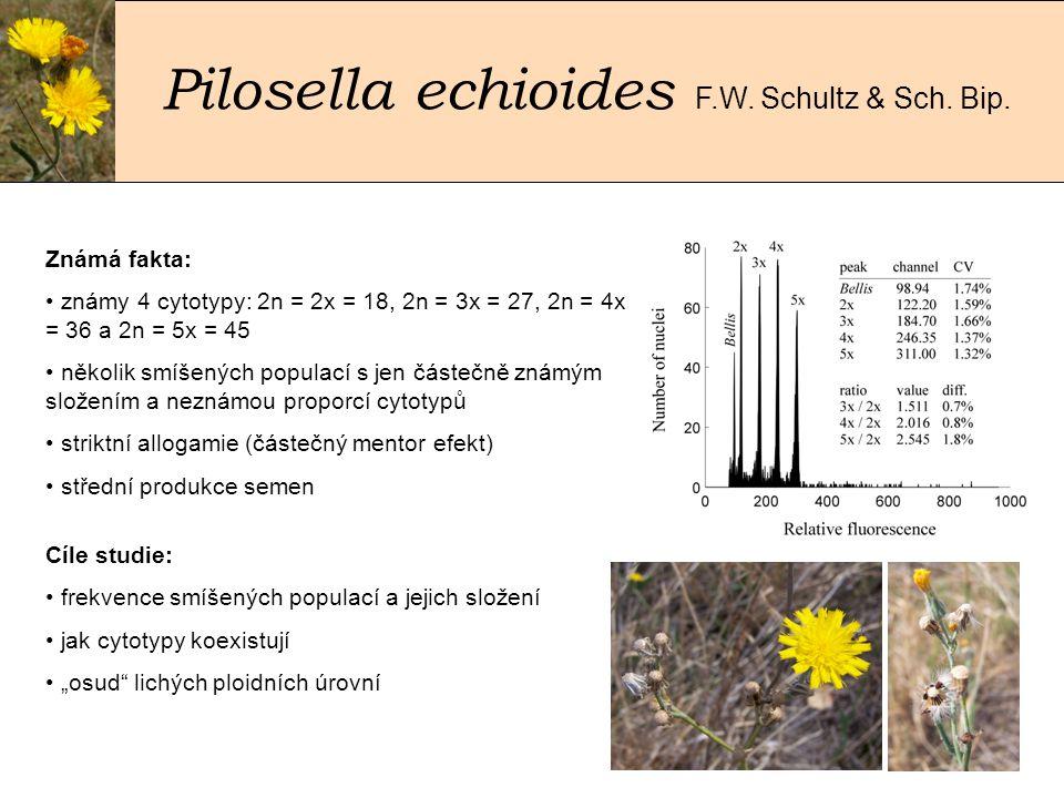 Pilosella echioides F.W.Schultz & Sch. Bip.