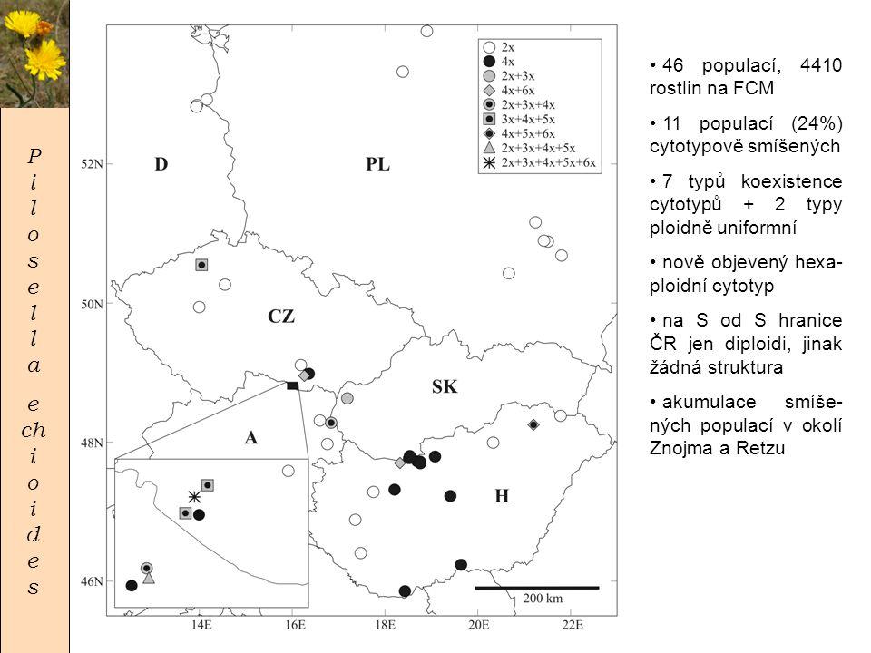 P i l o s e l l a e ch i o i d e s • 46 populací, 4410 rostlin na FCM • 11 populací (24%) cytotypově smíšených • 7 typů koexistence cytotypů + 2 typy ploidně uniformní • nově objevený hexa- ploidní cytotyp • na S od S hranice ČR jen diploidi, jinak žádná struktura • akumulace smíše- ných populací v okolí Znojma a Retzu