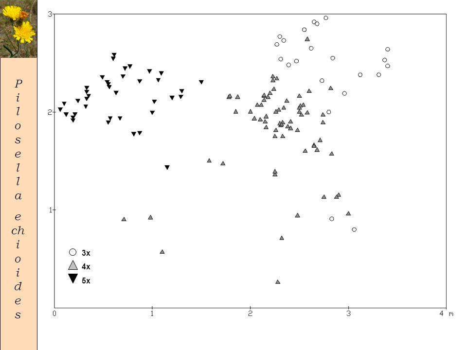 P i l o s e l l a e ch i o i d e s • 19 subpopulací, 2388 rostlin všech 5 ploidií – 2x-6%; 3x-73%; 4x-20%; 5x-1%; 6x-1 jedinec • 2 subpopulace ploidně uniformní, 17 smíšených v 6 typech 2x 3x 4x 5x 3x 4x 5x