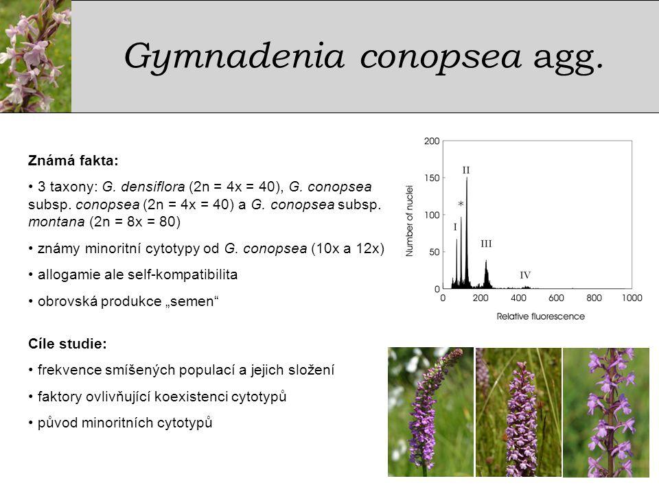GymnadeniaconopseaGymnadeniaconopsea • 43 populací, 3581 rostlin • 5 ploidních úrovní – 4x, 6x, 8x, 10x a 12x • 60% populací ploidně variabilních • koexistence až 6 taxonů / cytotypů G.