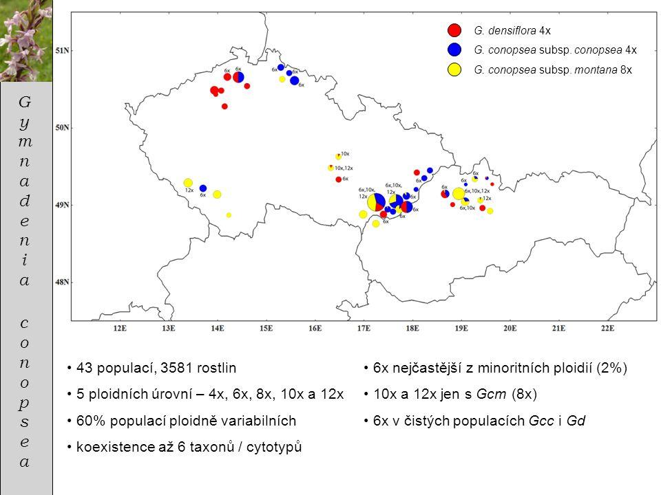 GymnadeniaconopseaGymnadeniaconopsea • 43 populací, 3581 rostlin • 5 ploidních úrovní – 4x, 6x, 8x, 10x a 12x • 60% populací ploidně variabilních • ko