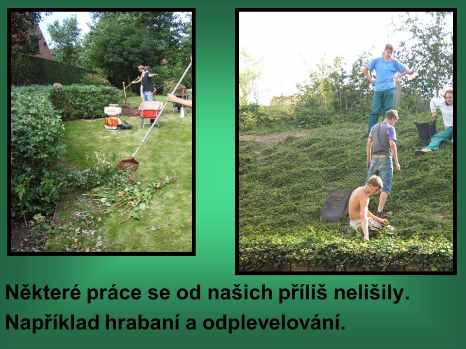 Součástí praxe byla péče o trávníky a trvalkové záhony, a také řez okrasných dřevin.