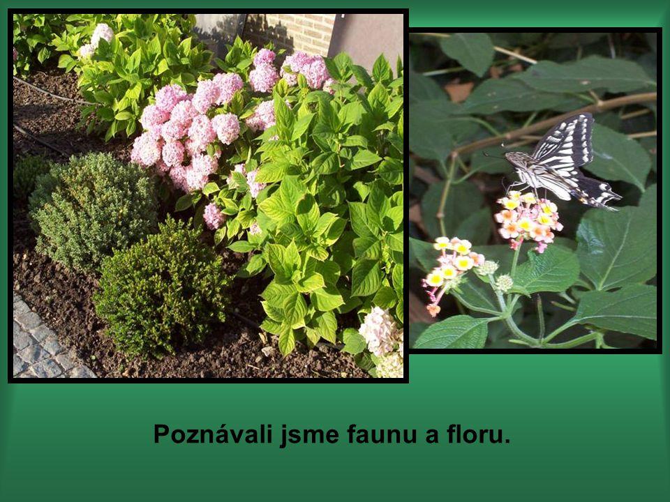 Poznávali jsme faunu a floru.