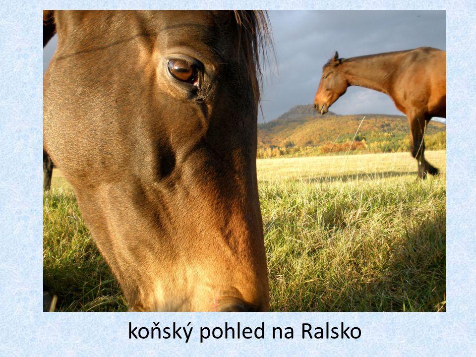 koňský pohled na Ralsko