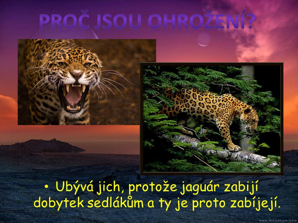 • Pudu jižní je zařazen do Červené knihy ohrožených druhů zvířat IUCN.